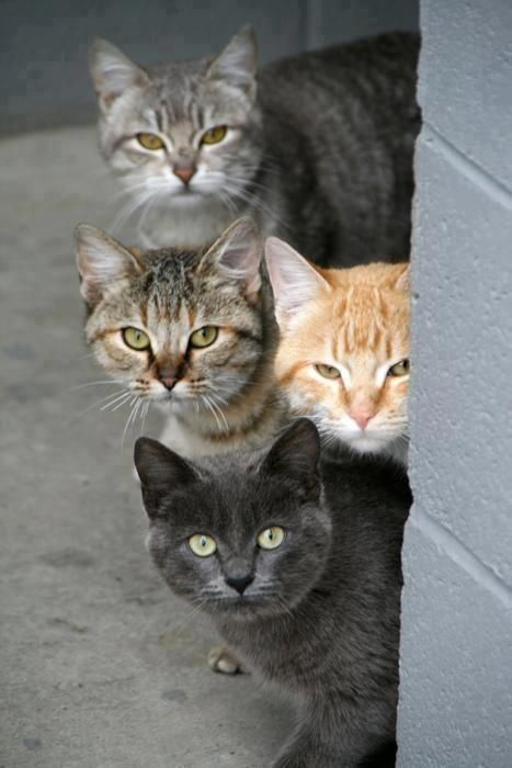 Любопытные коты (24 фото)