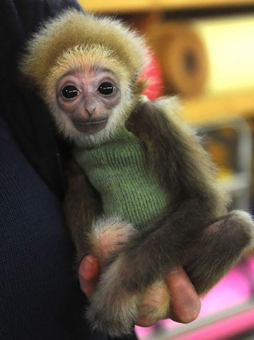 Милые животные в свитерах (36 фото)