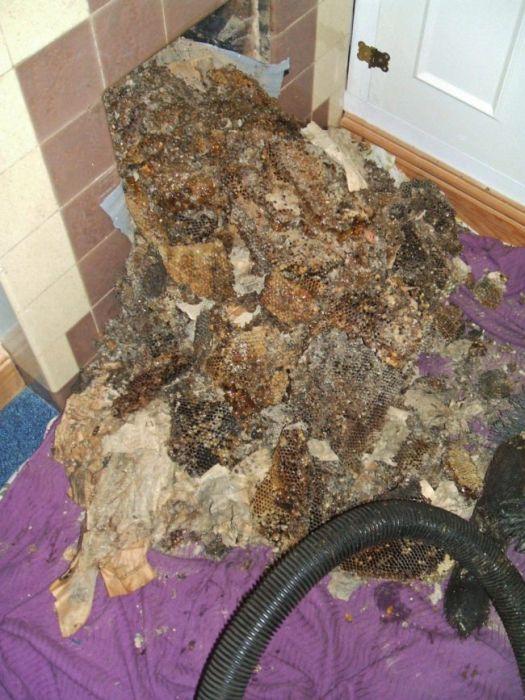 Пчелы, поселившиеся в камине (5 фото)