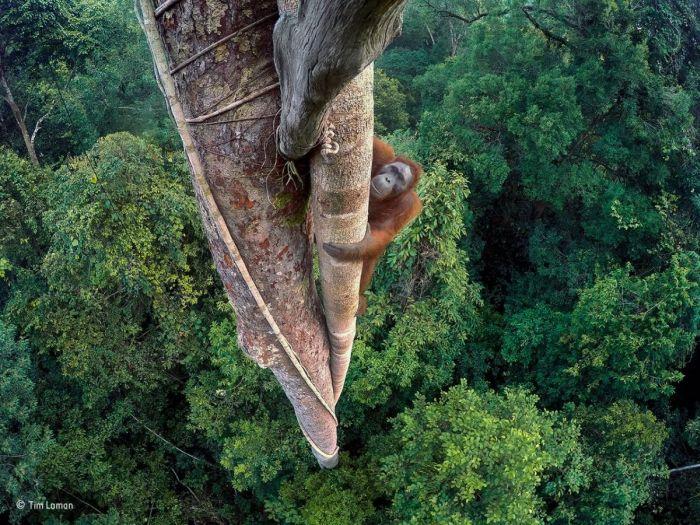 Лучшие работы фотоконкурса дикой природы Wildlife Photographer of the Year (12 фото)