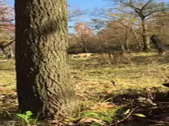 Охотник погладил дикого оленя