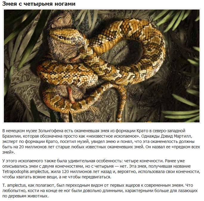 10 вымерших животных с необычными особенностями (10 фото)
