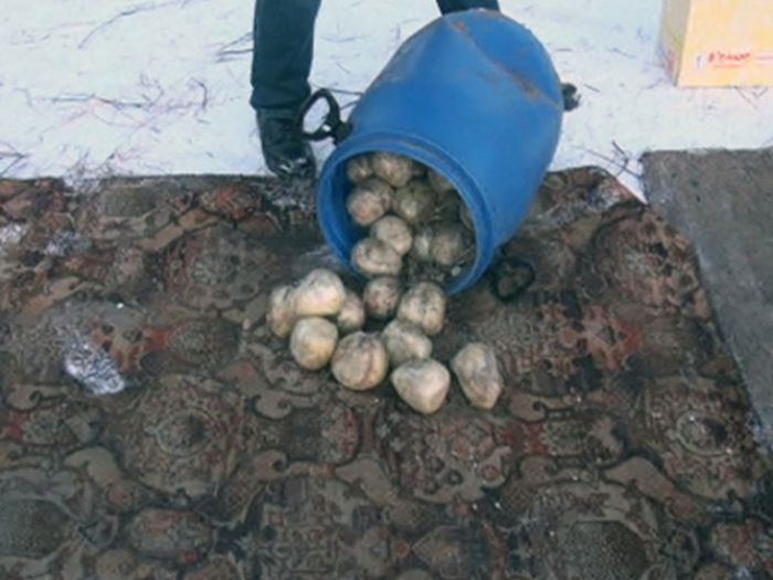 Житель Перми хранил 123 кг героина в сарае с баранами (4 фото + видео)