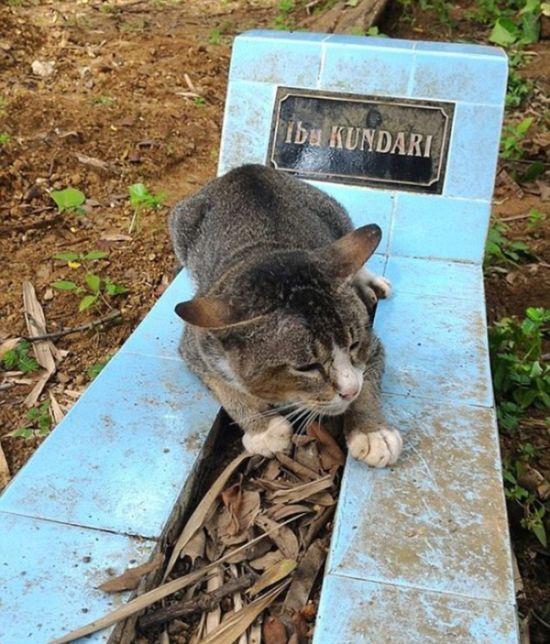 В Индонезии кошка целый год прожила у могилы хозяйки (4 фото)
