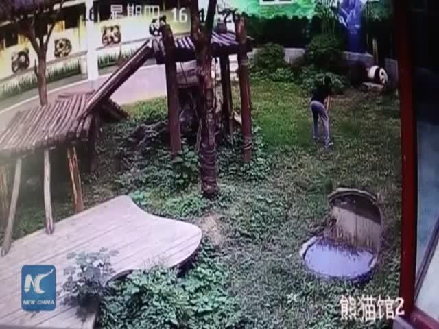 В китайском зоопарке парень поборолся с пандой