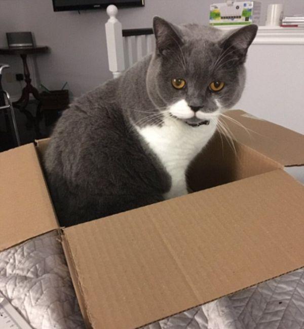 Кошки и коробки (20 фото)