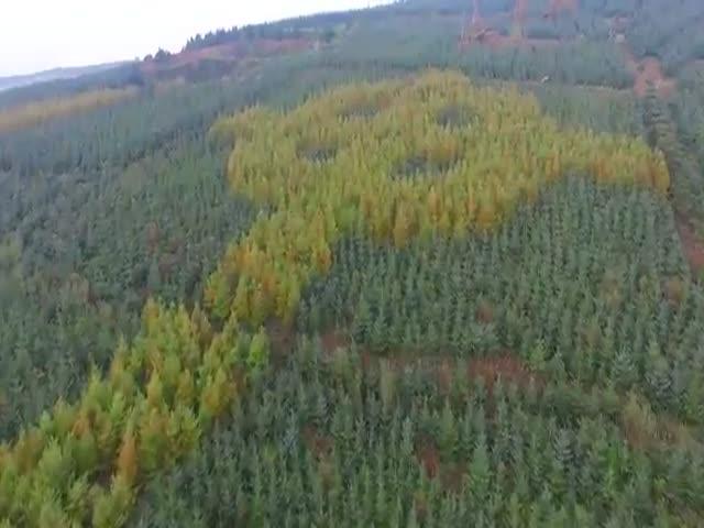 Кельтский крест из деревьев
