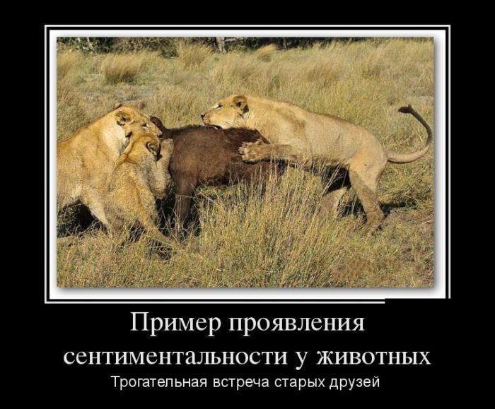 демотиваторы пример дружбы