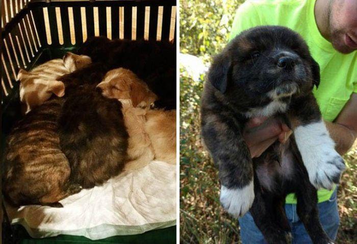 Лесной мальчишник превратился в заботу о бездомных щенках (9 фото)