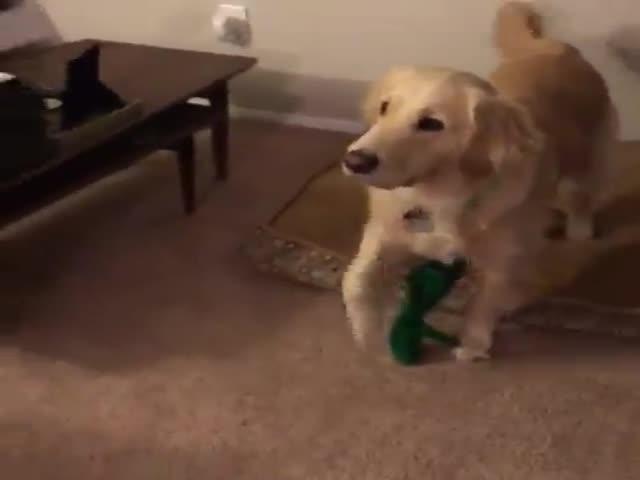 Собака увидела живую копию любимой игрушки