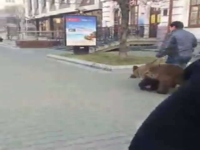 Мужчина выгулял медведя в центре Хабаровска