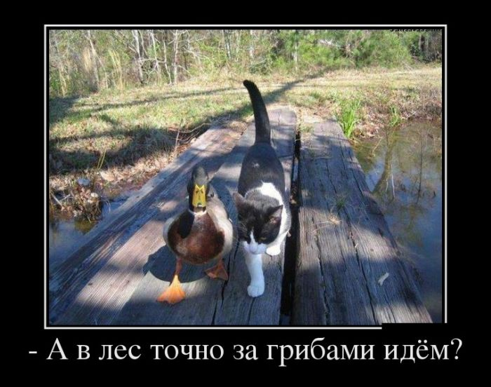 http://trinixy.ru/pics5/20161103/demotivatory_08.jpg