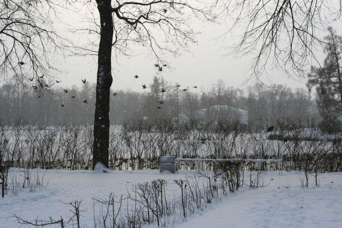 Нашествие уток в Пушкино (4 фото)