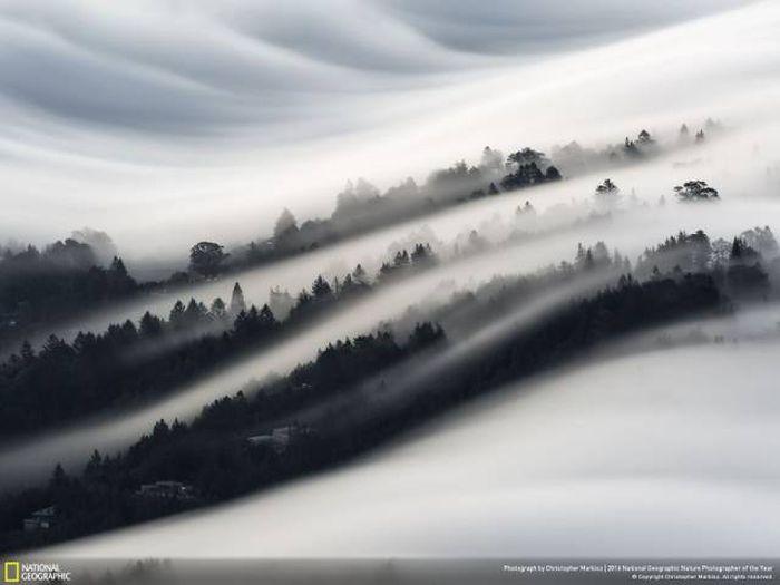 Лучшие работы фотоконкурса National Geographic Nature Photographer 2016 (49 фото)