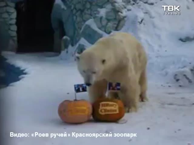 Белый медведь и тигрица «предсказывают» результаты президентских выборов в США
