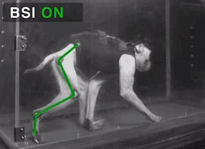 Ученые вернули подвижность парализованной обезьяне (6 фото + видео)