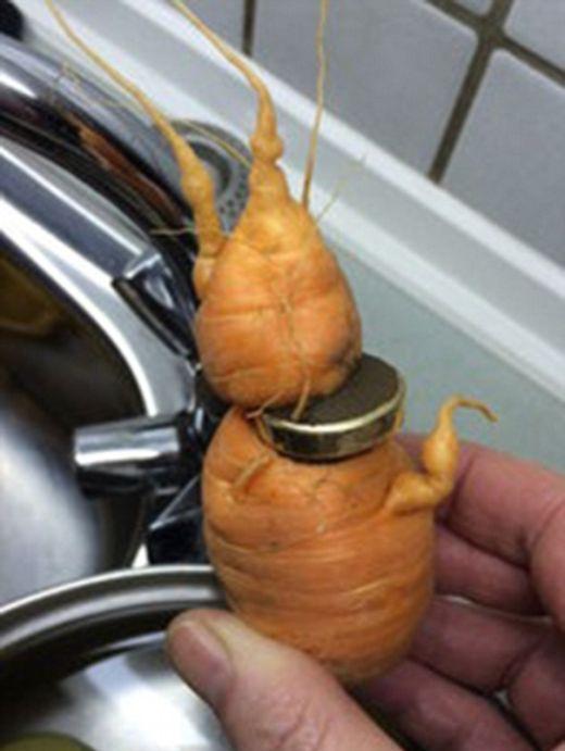 Морковь проросла через потерянное обручальное кольцо (2 фото)