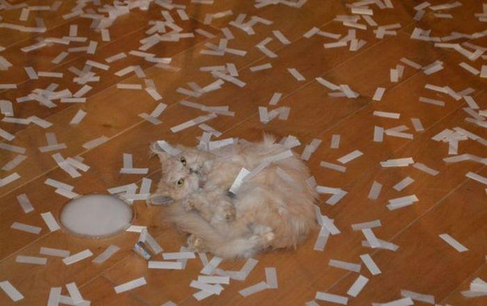 Выставка чучел животных вызвала недовольство среди посетителей Эрмитажа (4 фото)