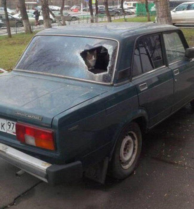Фото, которые возможно было сделать только в России. Часть 45 (46 фото)