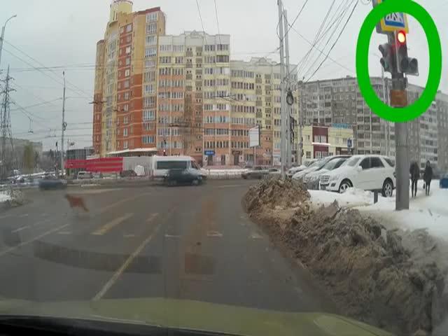 Собака оказалась разумнее пешехода