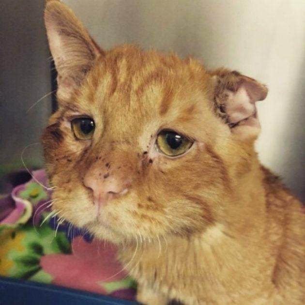 История спасения самого несчастного в мире кота (12 фото)