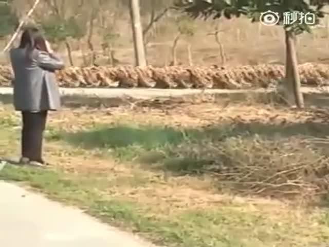 Утки устроили пробку в Китае