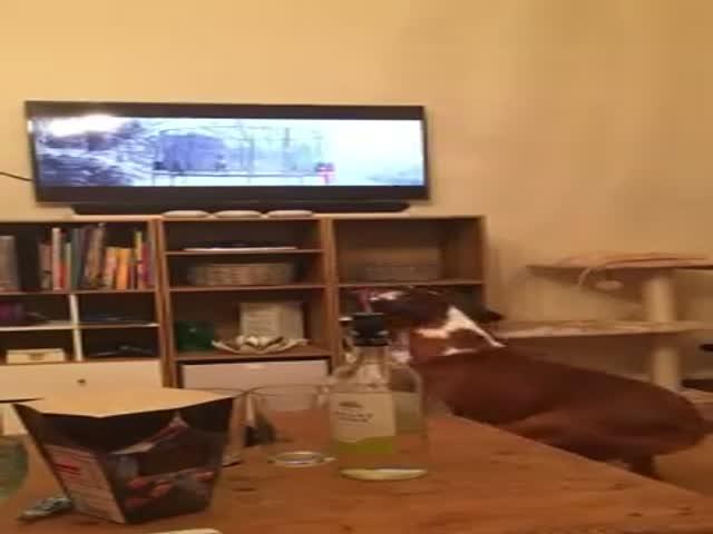 Эмоциональная собака смотрит телевизор