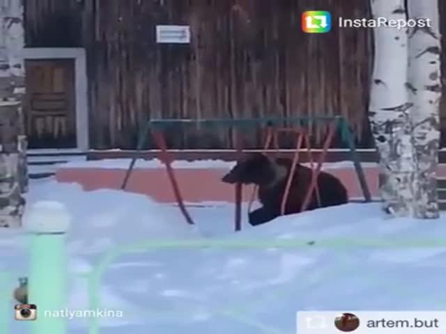 В Томской области медведь захотел покататься на качелях