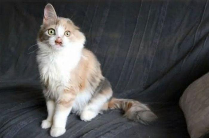 Девочка спасла от неминуемой смерти несчастного котенка (7 фото)