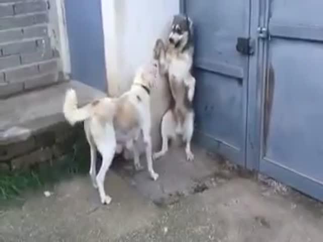 Наказание за обиду щенков