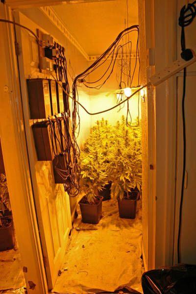 Бдительные соседи помогли обнаружить ферму по выращиванию марихуаны (9 фото)