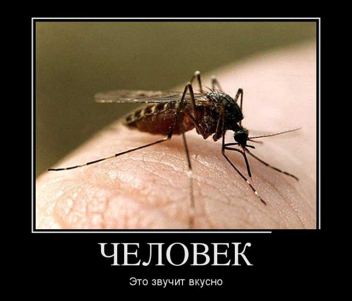 демотиватор комар из комаров