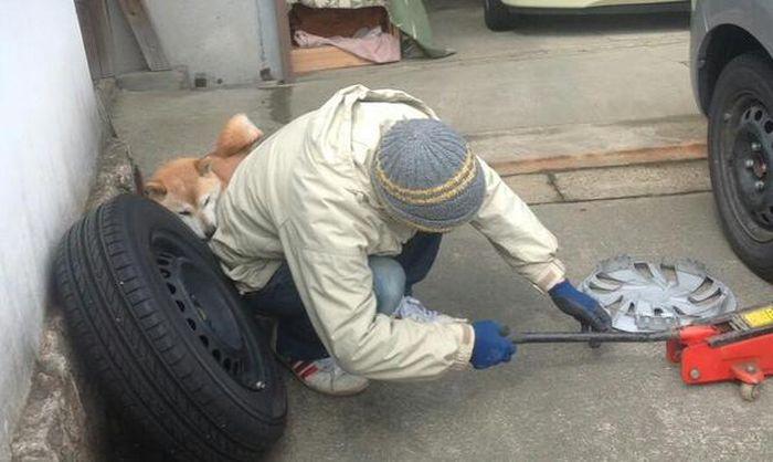 Собака решила помочь парню (4 фото)