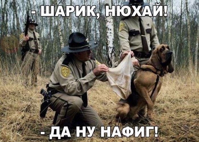 http://trinixy.ru/pics5/20161124/podborka_vecher_26.jpg