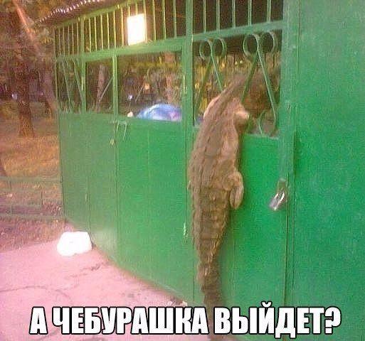 http://trinixy.ru/pics5/20161124/podborka_vecher_45.jpg