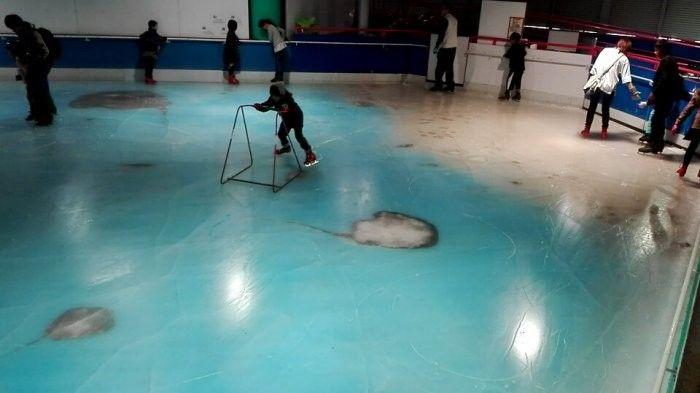 В Японии закрыли каток, в лед которого вморозили 5000 рыб (2 фото + видео)