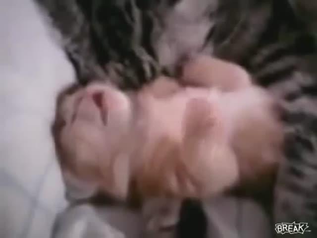 Кошка защищает котенка от кошмара