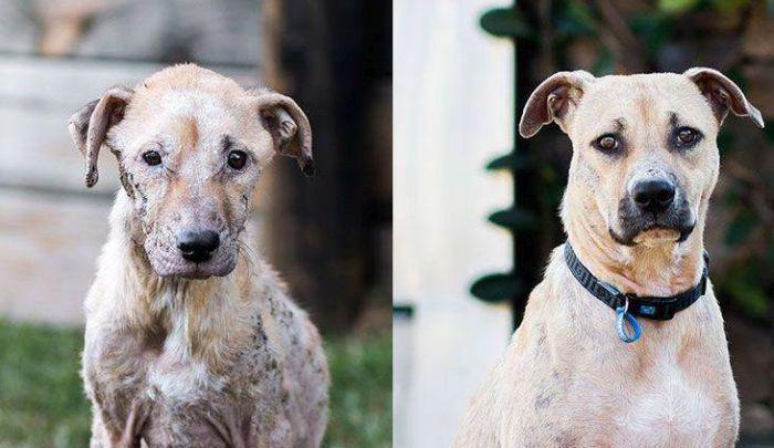 Чудесное преображение спасенной собаки (3 фото)