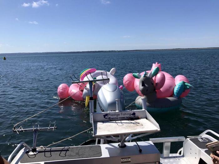 В Австралии 4 девушки случайно оказались в открытое море на надувных фламинго, единороге и динозавре (3 фото)