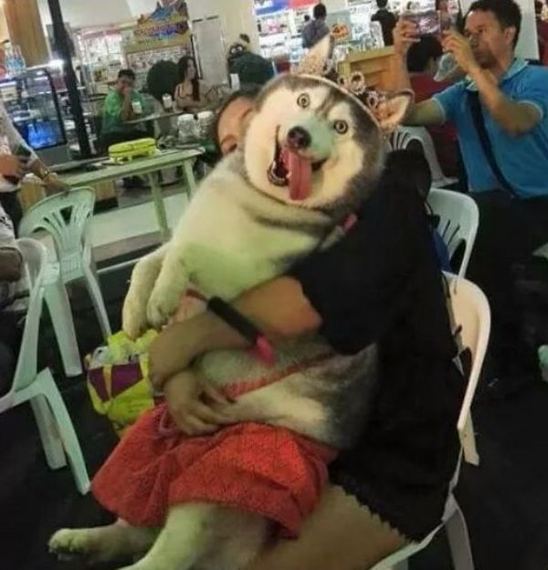 Подборка смешных фото с животными (30 фото)