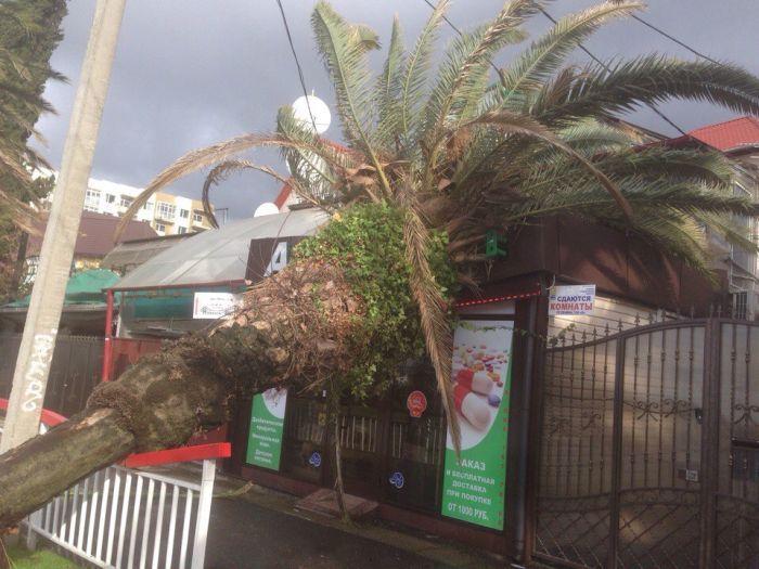Мощный шторм обрушился на Сочи (18 фото + 3 видео)