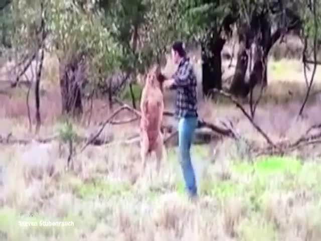 Парень подрался с кенгуру