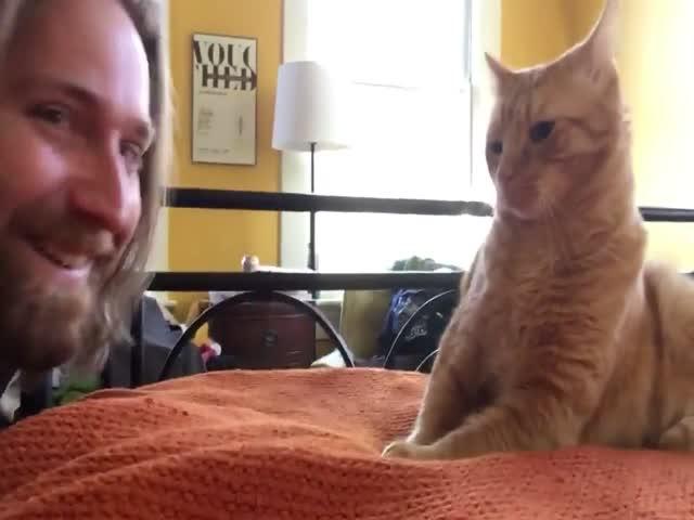 Хозяин отомстил коту
