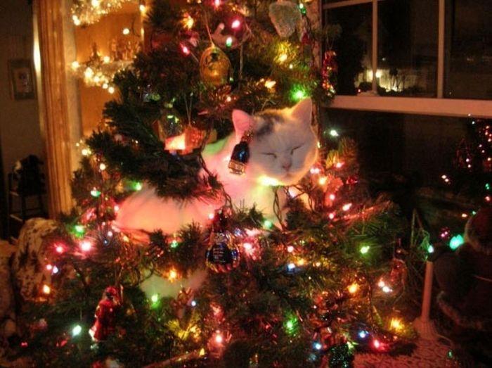 Коты на елках и под елками (22 фото)