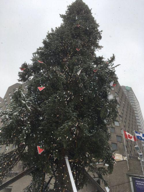 Вместо самой высокой елки в Монреале установили самую уродливую елку (5 фото)
