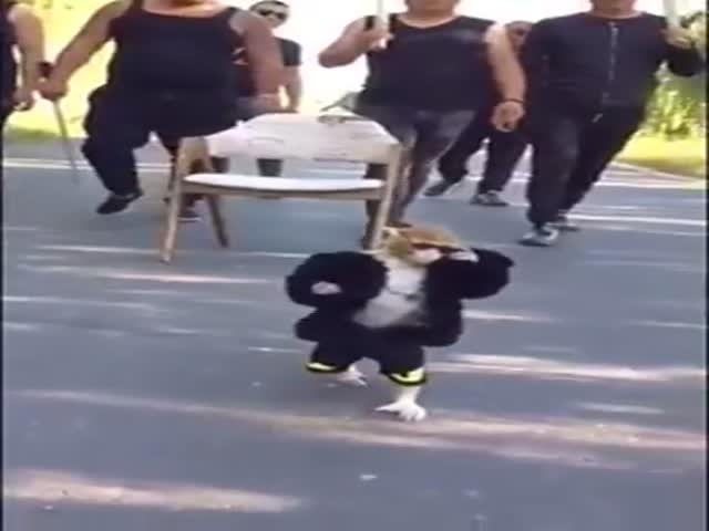Не стоит шутить с этой обезьянкой