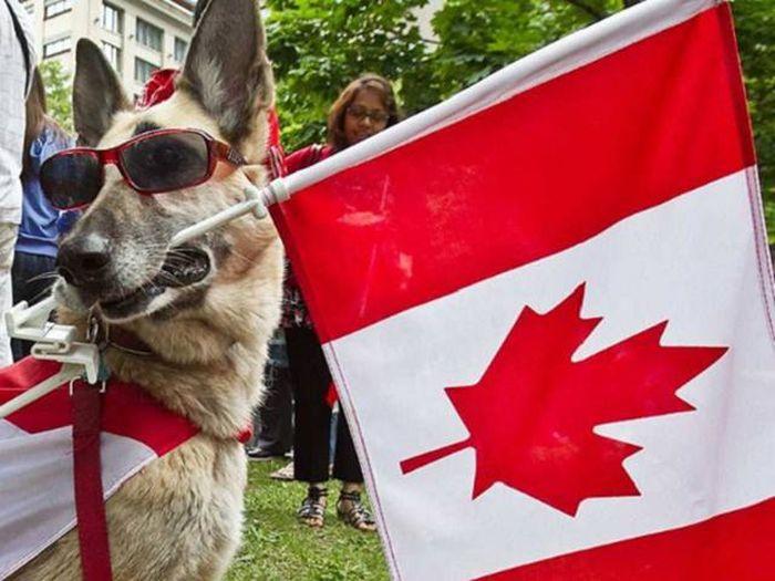 Смешные фото из Канады (42 фото)