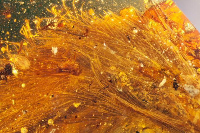В янтаре нашли хвост динозавра, жившего 99 миллионов лет назад (6 фото)