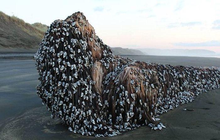 Таинственный предмет на берегу Новой Зеландии