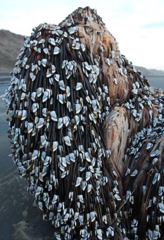 Таинственный предмет на пляже Новой Зеландии (3 фото)
